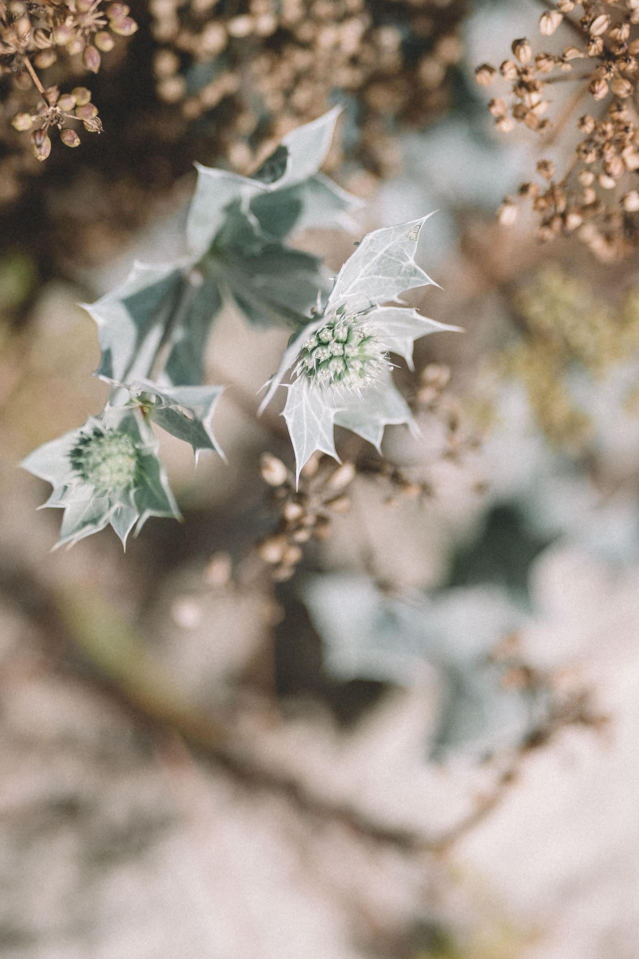 rubenphotographie-mariage-détail-végétation-carnac